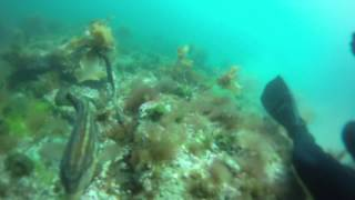 preview picture of video 'BUCEO EN PUERTO MADRYN, ARGENTINA - N. FLORES - GOPRO'