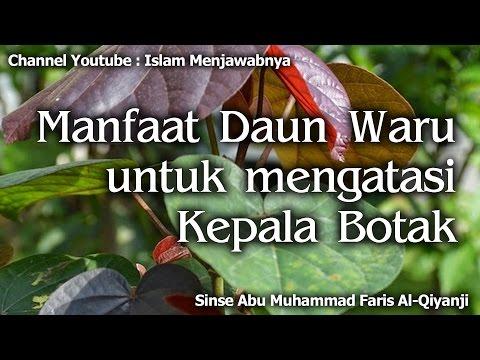 Video Manfaat Daun Waru untuk mengatasi Kepala Botak | Sinse Abu Muhammad Faris Al-Qiyanji