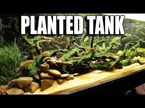 MY PLANTED AQUARIUM - EXPLAINED