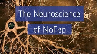 The Neuroscience of NoFap | Why Pornography Changes the Brain
