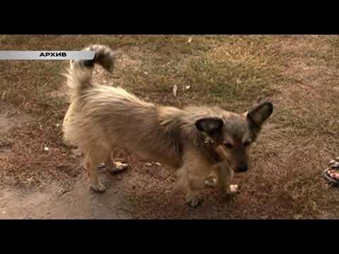 Бродячие собаки продолжают атаковать Курск