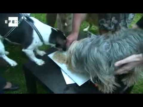 Inaguran el primer bar  para perros en Bélgica