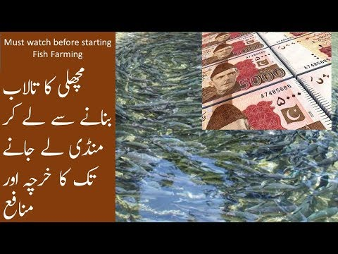 , title : 'How much Profit can you make in Fish Farming Business? Fish farming cost estimation Urdu/hindi