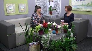 Кімнатні рослини: користь чи небезпека