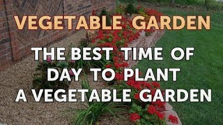 The Best Time of Day to Plant a Vegetable Garden