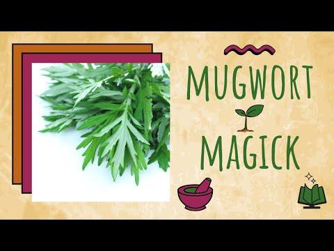 Video Mugwort Herbal Magick #8
