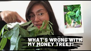 What's wrong with my MONEY TREE?!   010