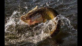 Платная рыбалка на щуку в тверской области