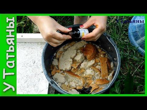 Подкормка из хлеба и йода для растений! Хлебная подкормка с йодом для огурцов, томатов и растений.