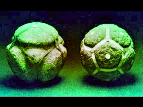 ¿Quién construyó esto en la tierra hace 408 millones de años?