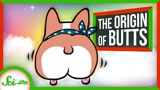 On the Origin of Butts