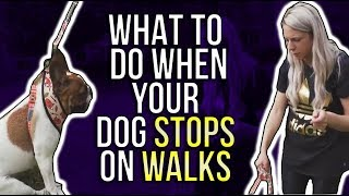 WHAT TO DO WHEN YOUR DOG STOPS ON WALKS