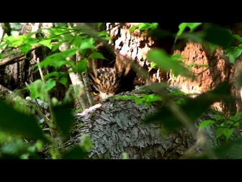 Tawny Fish Owl-A Mysterious Bird in the Dark