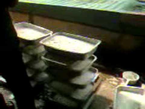 SSMSC mushroomz Je ปรสิตโรสลิน