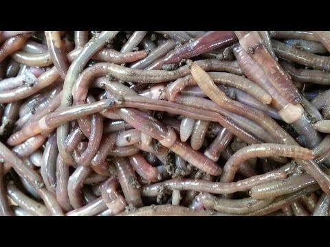 Survival: Dude Teaches Us How To Find Worms Just In Case