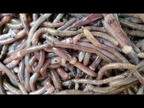 Maaasahang pagsubok para Giardia