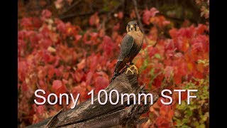 Sony 100mm STF GM in real life