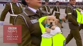 Щенки-полицейские на параде в Сантьяго покорили зрителей