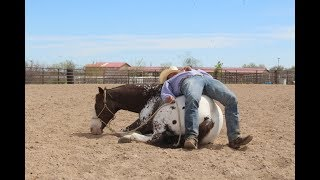 Happy A 2009 ApHC Appaloosa Gelding- Trick Horse, Roping Horse, Trail Horse