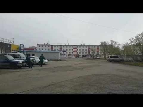 الشرطة الروسية تحاول القبض على دب هارب