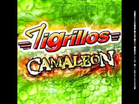 Tigrillos - La Botella