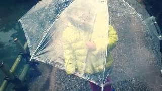 青青的日本…雨天櫻花☔