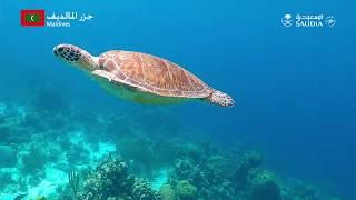 سافر مع الخطوط السعودية الى المالديف | Fly SAUDIA to Maldives