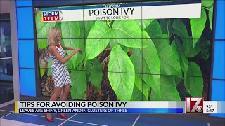 Tips for avoiding poison ivy this summer in NC