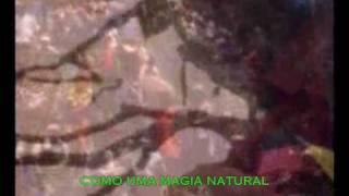 Bob Marley - Natural Mystic [LEGENDADO PT-BR] - Video Youtube