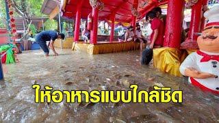 น้ำท่วมปลาโผล่! ให้อาหารปลาแบบถึงใจ อะเมซิ่ง 'วัดท่าการ้อง' อยุธยา