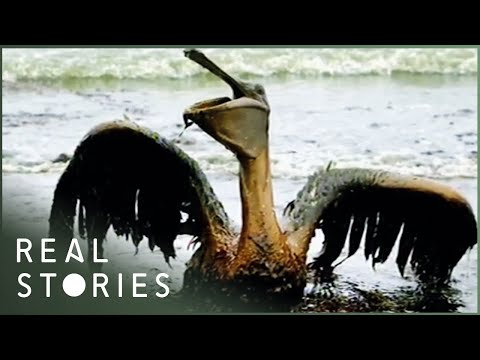 BP: $30 Billion Blowout (Documentary) – Real Stories