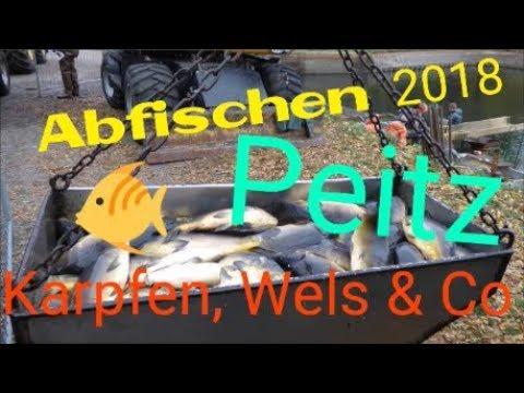 Abfischen 2018 in Peitz am Hälterteich / Karpfen, Wels & Co 🐟🐟🐟