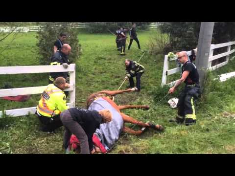 Horse Rescue by Maple Ridge Fire Department