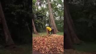 Butterfly sings Hakuna Matata & Twerks in a Tree 2016 Zanzibar trip.