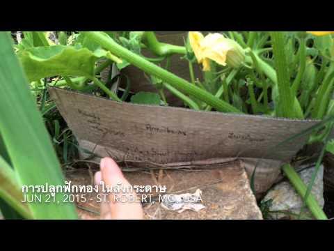 โครงการรักษา lamblia Trichopolum