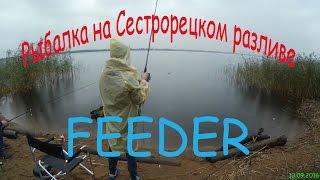 Места для рыбалки на сестрорецком разливе