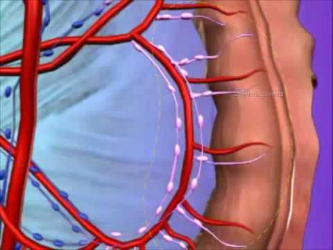 Ciprofloxacin nepadeda su prostatitu