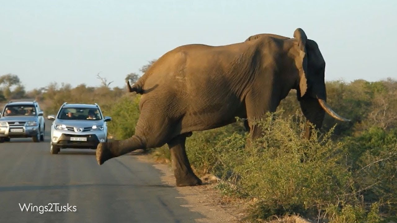 У слона зачесалась нога