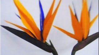 Paper Flowers - Bird Of Paradise (Flower # 46)