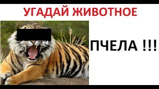 Лютые приколы. ЛУНТИК-ГОПНИК и МАМА ЗАБАНИЛА