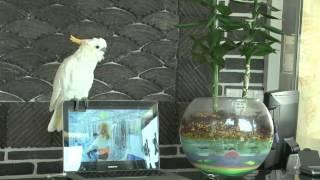 PSY, Попугай поёт Gangnam style