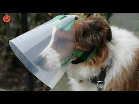 NOVAGUARD Leckschutz für Hunde