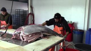 A tour of Fishermans Processing in action 12-21-13