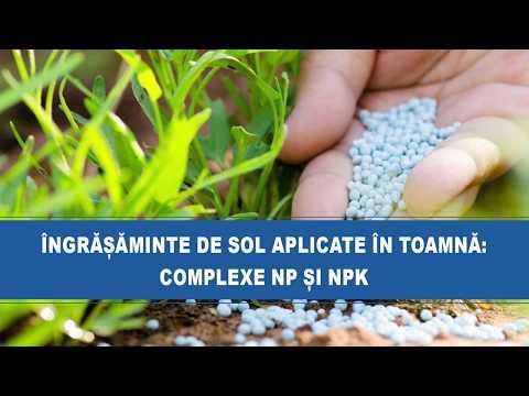 medicina parazitară trei papilloma gengivale cause