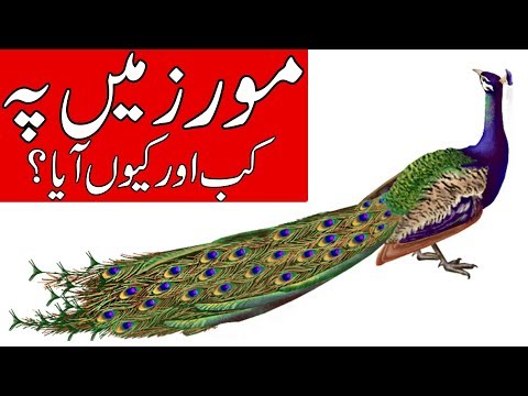 Mor kab zamin pe ain || ilm e jafar || مور || peacock || information for kids || Mehrban Ali