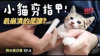 【黃阿瑪的後宮生活】小貓剪指甲!最崩潰的是誰?四小虎日常EP.4