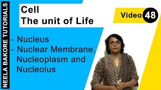 Cell - The unit of Life - Nucleus - Nuclear Membrane, Nucleoplasm and Nucleolus