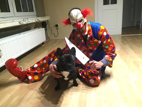 Killerclown Scares Dog - Halloween Special