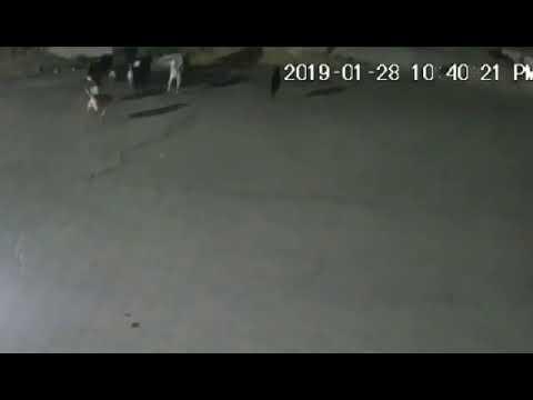 Atrapan a cinco de los 11 perros que mataron a mujer en Tecámac