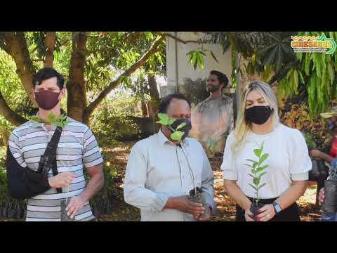 Cidesasul contempla município de Juscimeira com mil de mudas de plantas frutíferas e nativas